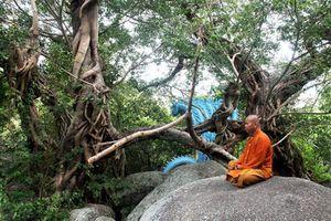 Công nhận thêm 5 cây di sản tại Khánh Hòa