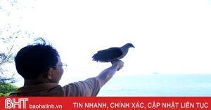 Thợ săn lùng sục, loại chim quý ở vùng biển Kỳ Xuân rời bỏ chốn quen