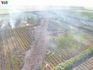 Lại xảy ra cháy rừng lớn ở Hòn Đất, Kiên Giang