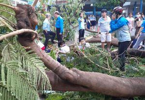 TP Hồ Chí Minh thông tin chính thức vụ cây đổ khiến 18 học sinh thương vong