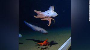 Phát hiện bạch tuộc ở độ sâu hơn 6.000 m dưới đấy biển