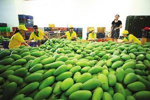 Khôi phục hoạt động xuất khẩu nông sản tươi
