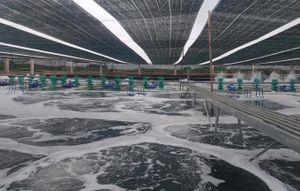 Mô hình nuôi tôm công nghệ cao ở Bà Rịa - Vũng Tàu được đánh giá cao