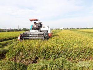 Nam Định: Thắng vụ xuân, lo vụ mùa