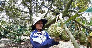Nghiên cứu cây ăn quả cho Tây Nguyên