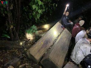 Bắt đối tượng cầm đầu vụ khai thác gỗ trái phép quy mô lớn ở Đắk Lắk