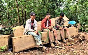 Phát hiện thêm một vụ khai thác gỗ trái phép quy mô lớn ở Đắk Lắk