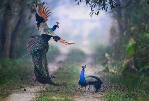 Ảnh động vật đẹp: Công đại chiến với đồng loại, kỳ đà 'trao nụ hôn'