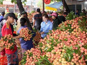Bắc Giang: Xuất gần 30.000 tấn vải thiều đi nhiều thị trường khó tính