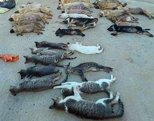 Khởi tố 5 đối tượng trộm hàng tấn chó, mèo bằng chất độc Xyanua
