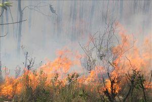 Nỗ lực khống chế cháy rừng lây lan tại Nghệ An