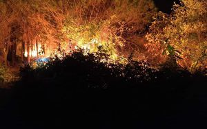Cháy rừng cao su ở Hà Tĩnh, nguy cơ lan sang rừng thông lâu năm