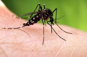 Tuyệt chiêu đuổi muỗi hiệu quả tại nhà không cần dùng hóa chất