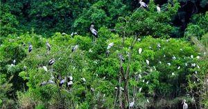 Thu hút học sinh, sinh viên đến Vườn quốc gia Cúc Phương