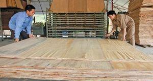 Ngành gỗ: Minh bạch xuất xứ để tránh rủi ro