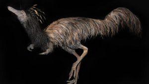 Kỳ quái loài khủng long có móng vuốt dài ở cánh tay, chân lại như đà điểu