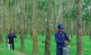 Cao su Tây Ninh (TRC) công bố báo lợi nhuận quý II/2020 giảm tới 43,5%