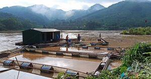 Mưa lớn tại Tuyên Quang cuốn trôi 10 lồng cá của người dân