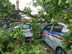 Cây cổ thụ trên đường Trần Hưng Đạo gãy cành khiến 5 ô tô hư hại