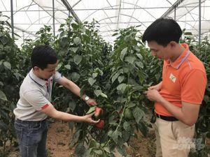 Xuất khẩu rau quả từ chuỗi liên kết với nông dân, doanh nghiệp