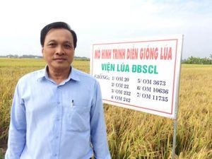 Lúa giống Doseco được đánh giá cao
