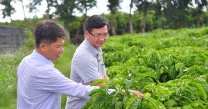 'Lò' sản xuất cây giống chất lượng cao cho Tây Nguyên