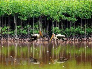 Đất ngập nước chống biến đổi khí hậu: Tấm lá chắn bảo vệ bờ biển