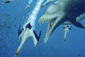 Loài cá heo ăn thịt siêu lớn này từng là nỗi kinh hoàng một thời của các đại dương trên Trái Đất