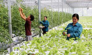Quan tâm phát triển nguồn nhân lực chất lượng cao khu vực nông thôn