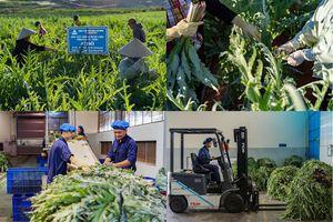Chuyện làm kinh tế xanh ở xứ sở mộng mơ