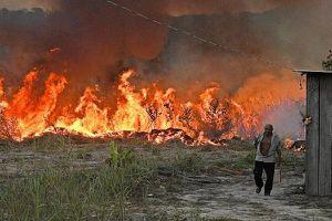 Cháy rừng Amazon gia tăng ở Brazil