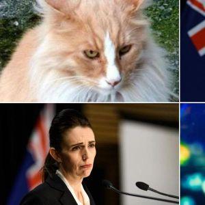 Thủ tướng Jacinda Ardern và mèo Mittens cạnh tranh giải 'Gương mặt New Zealand của năm'