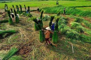 Nga Sơn - Thanh Hóa: Hành trình 10 năm cho một huyện Nông thôn mới