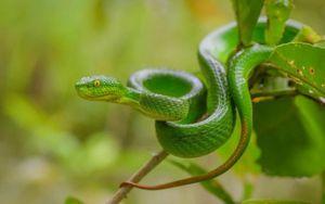 Cách nhận biết các loài rắn độc ở Việt Nam