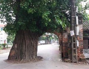 Bắc Ninh: Thân thương một bóng cổng làng