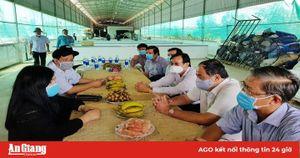 Nông dân giỏi ở huyện miền núi Tri Tôn
