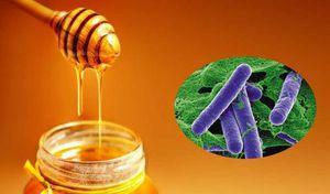 Mật ong có thể chứa vi khuẩn trong pate Minh Chay, khi sử dụng cần lưu ý điều gì?