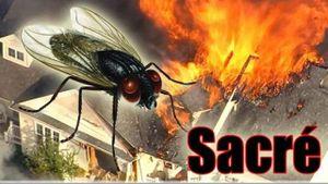Cố gắng diệt một con ruồi, người đàn ông khiến một phần ngôi nhà nổ tung
