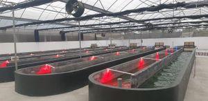 Khi trường đại học 'bắt tay' cùng doanh nghiệp sản xuất tảo xoắn