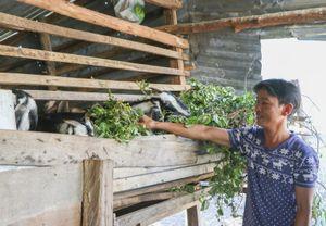 Ninh Thuận: Quỹ Hỗ trợ nông dân giúp nông dân thoát nghèo, con cái đều được đến trường