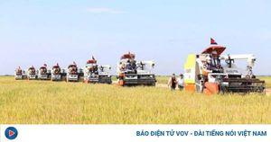 Năm 2020, diện tích canh tác lúa của Campuchia sẽ tăng hơn 99 %