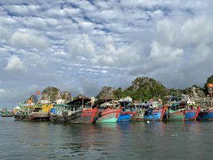 1.031 tàu thuyền đang di chuyển về bờ hoặc thoát khỏi khu vực nguy hiểm