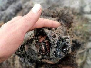 Phát hiện xác gấu tuyệt chủng nguyên vẹn hơn 22.000 năm tuổi