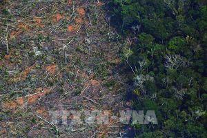 Vùng đất ngập nước lớn nhất thế giới Pantanal tiếp tục 'kêu cứu'