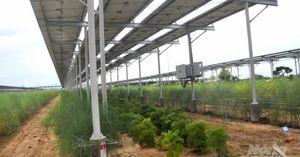 Nông dân 4.0 làm nông nghiệp tuần hoàn – đa tầng kêu cứu Thủ tướng