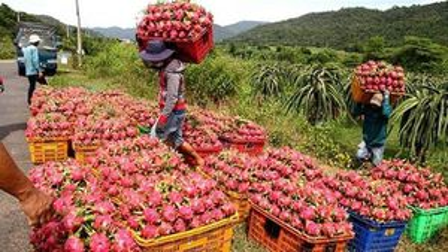 Cơ hội của nông sản