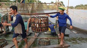 Khẳng định chất lượng, tạo niềm tin cho sản phẩm thủy sản