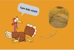 Câu chuyện con gà tây và bài học cắt lỗ trong đầu tư chứng khoán