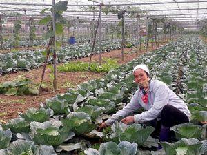 Sản xuất rau gắn với bảo vệ môi trường