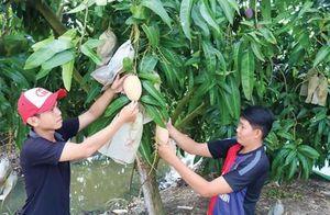 Giải pháp an toàn chuyển đổi đất trồng lúa kém hiệu quả